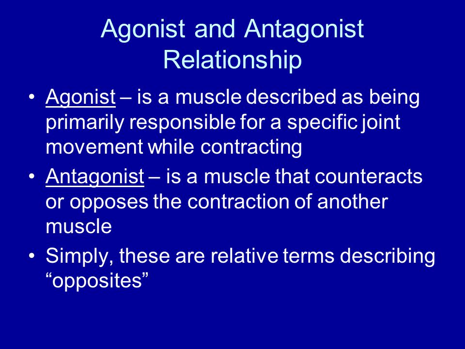 Agonist and Antagonist Relationship