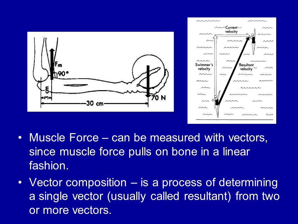 Muscle Force – can be measured with vectors, since muscle force pulls on bone in a linear fashion.