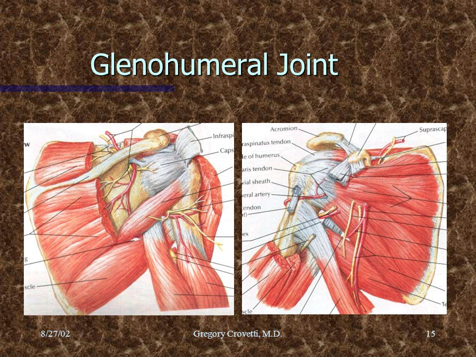 Glenohumeral Joint 8/27/02 Gregory Crovetti, M.D.