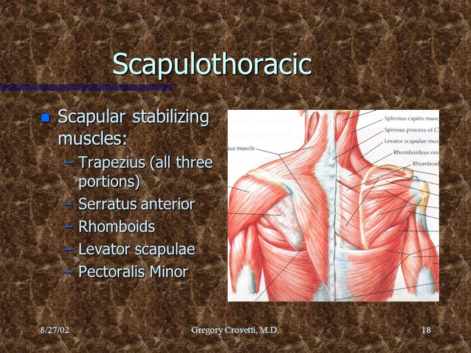 Scapulothoracic Scapular stabilizing muscles: