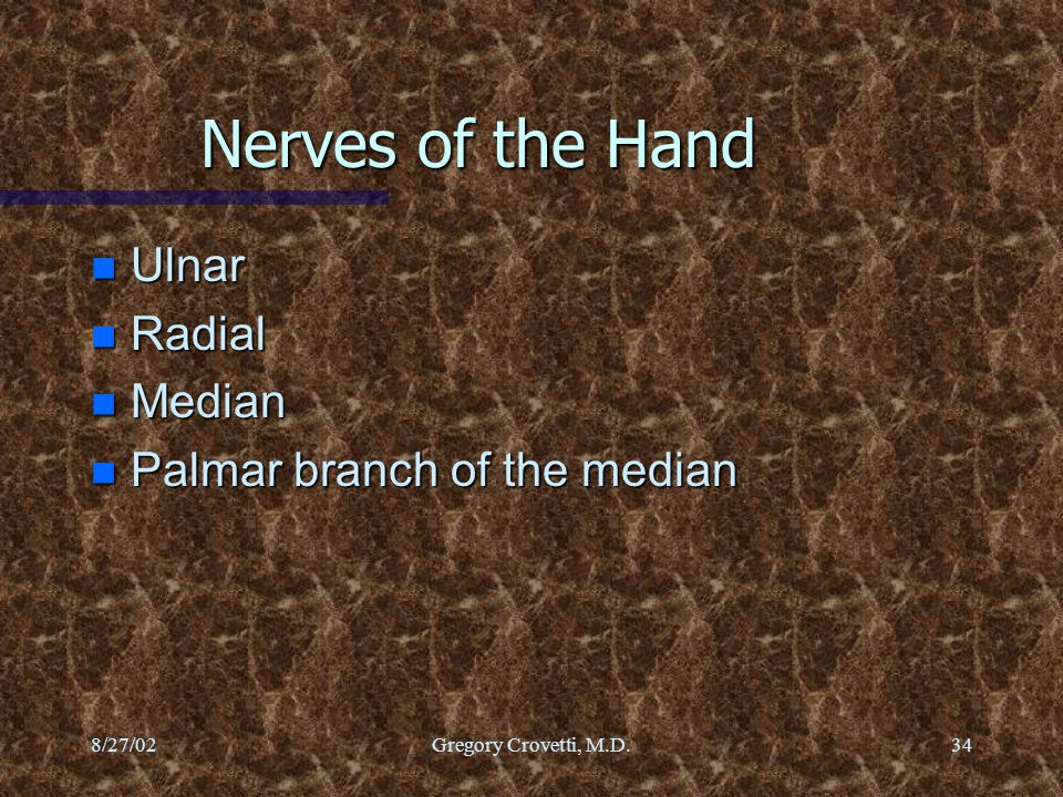 Nerves of the Hand Ulnar Radial Median Palmar branch of the median