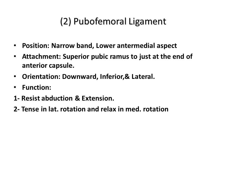 (2) Pubofemoral Ligament