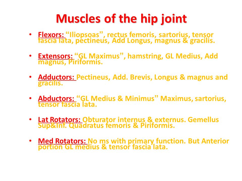 Muscles of the hip joint
