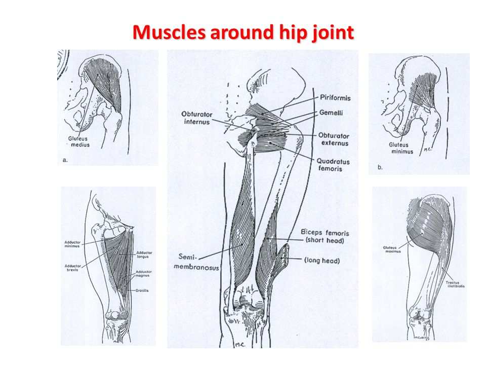 Muscles around hip joint