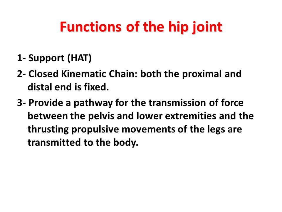 Functions of the hip joint