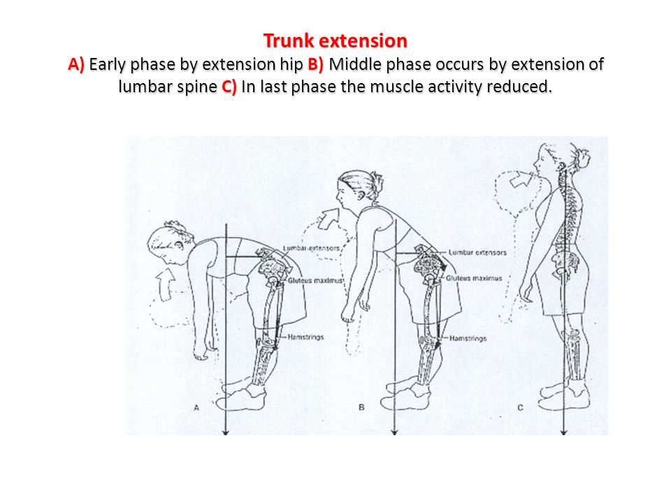 Trunk extension A) Early phase by extension hip B) Middle phase occurs by extension of lumbar spine C) In last phase the muscle activity reduced.