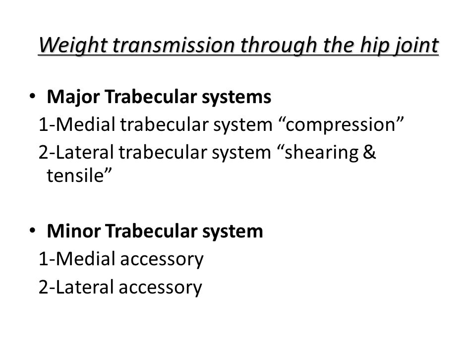 Weight transmission through the hip joint