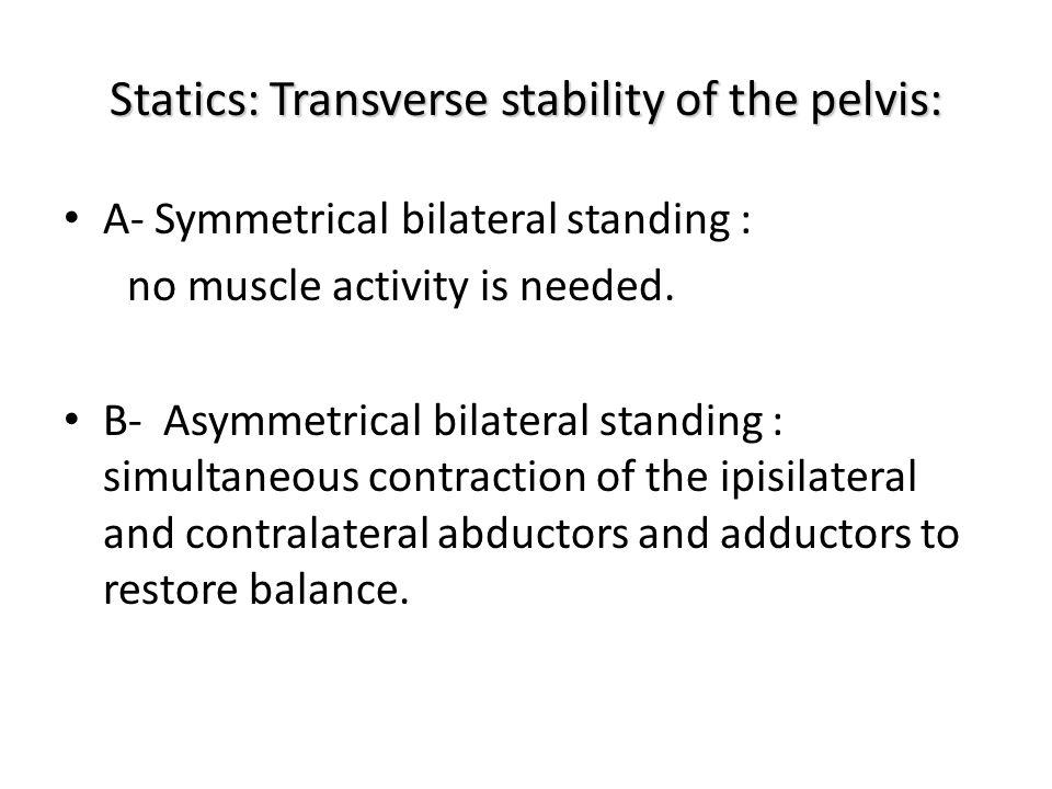 Statics: Transverse stability of the pelvis: