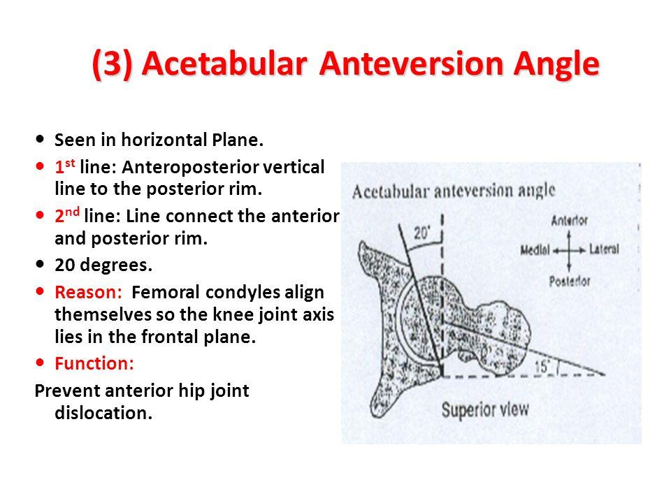(3) Acetabular Anteversion Angle