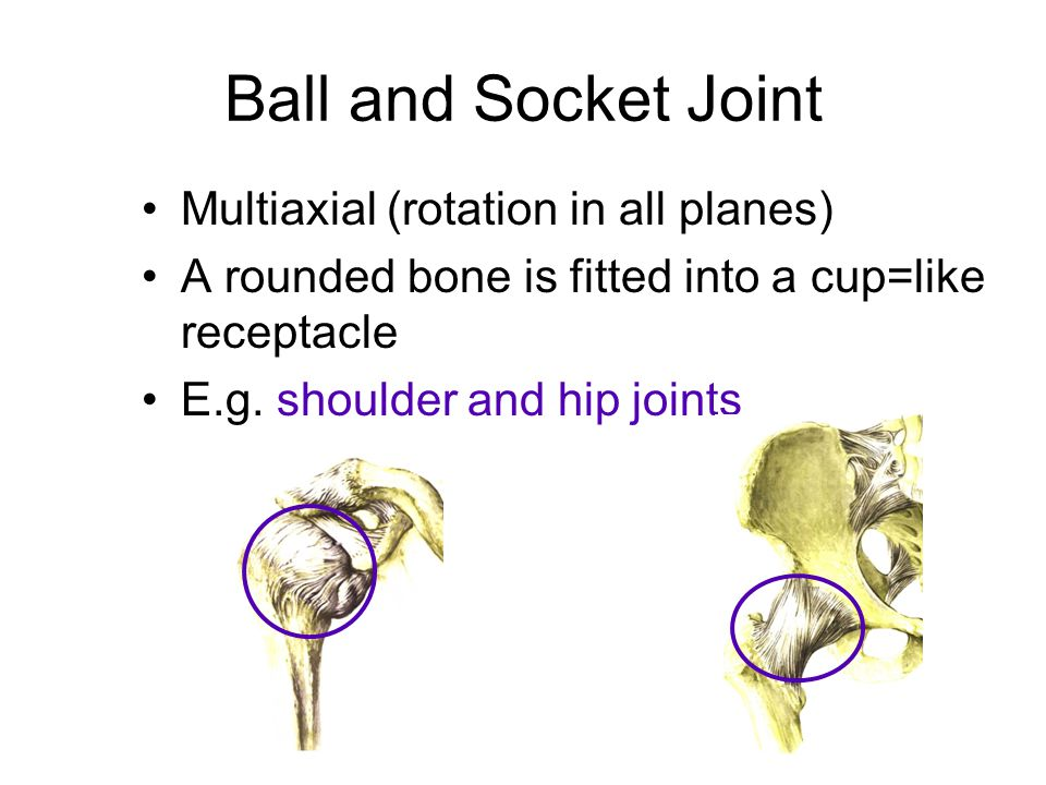 Ball and Socket Joint Multiaxial (rotation in all planes)