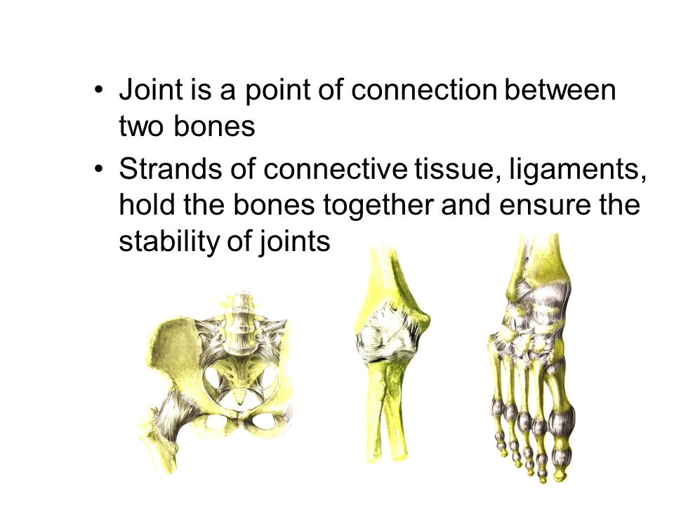 Joint is a point of connection between two bones