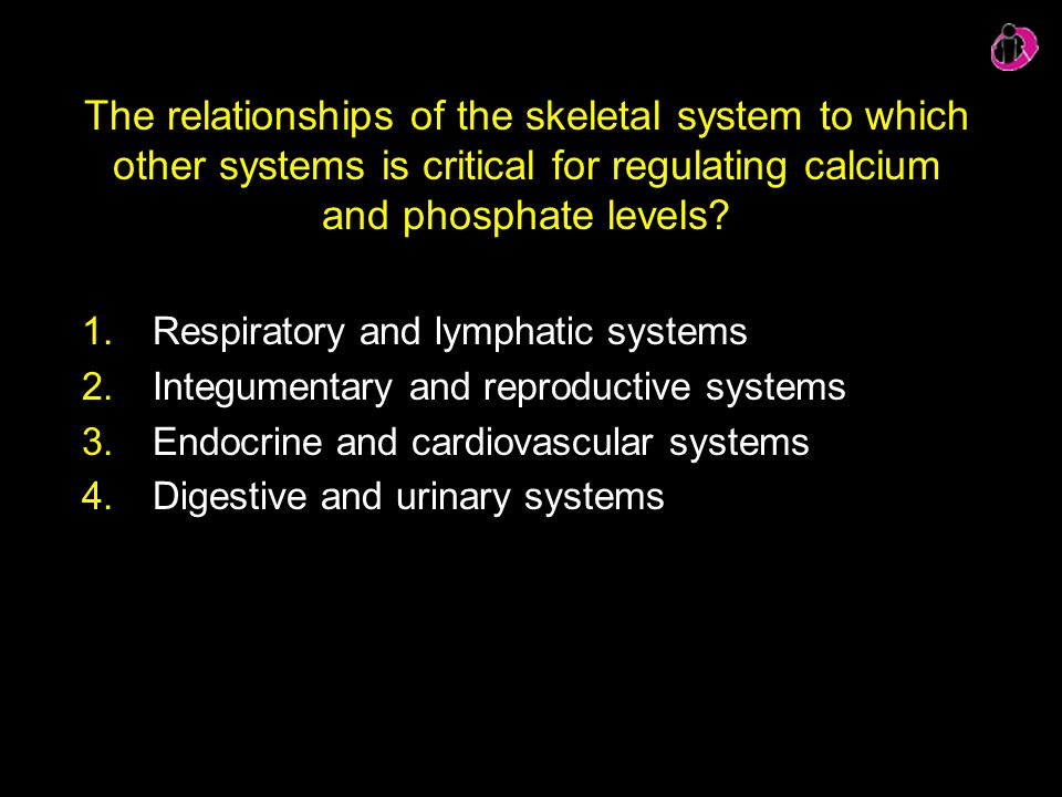 The relationships of the skeletal system to which other systems is critical for regulating calcium and phosphate levels