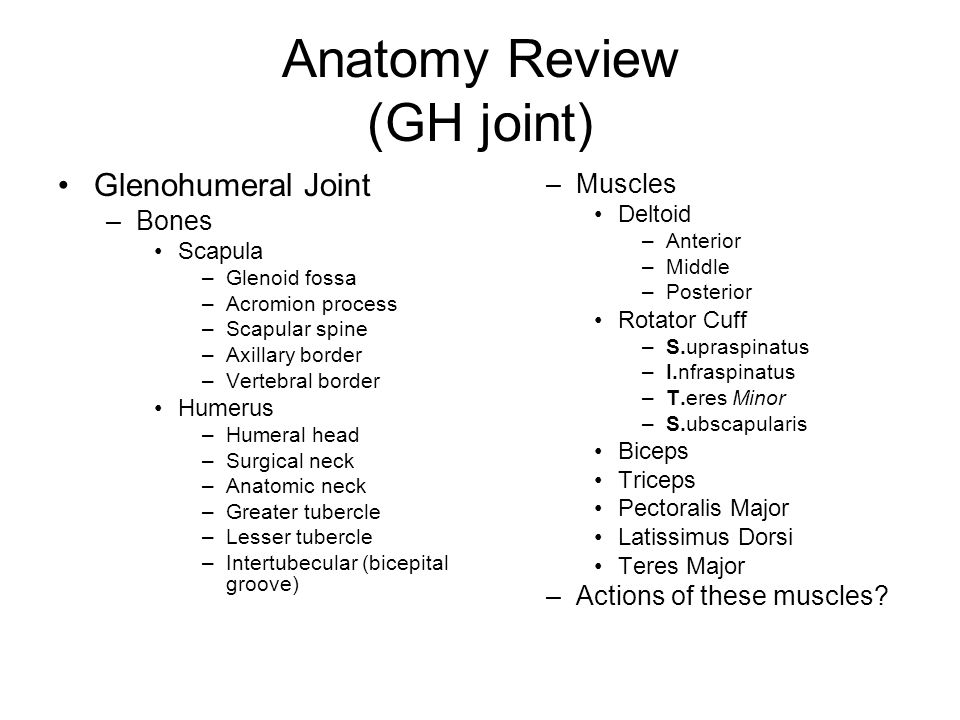 Anatomy Review (GH joint)