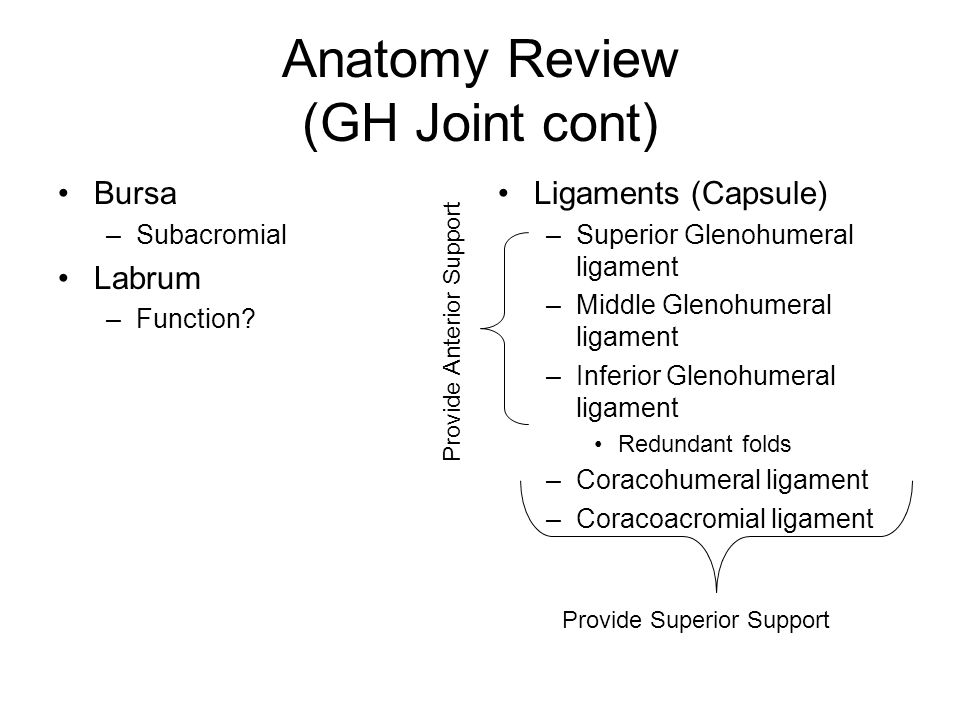 Anatomy Review (GH Joint cont)