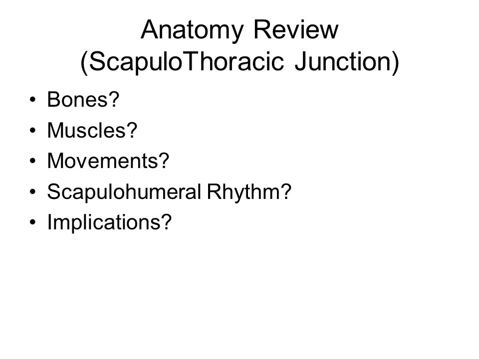 Anatomy Review (ScapuloThoracic Junction)