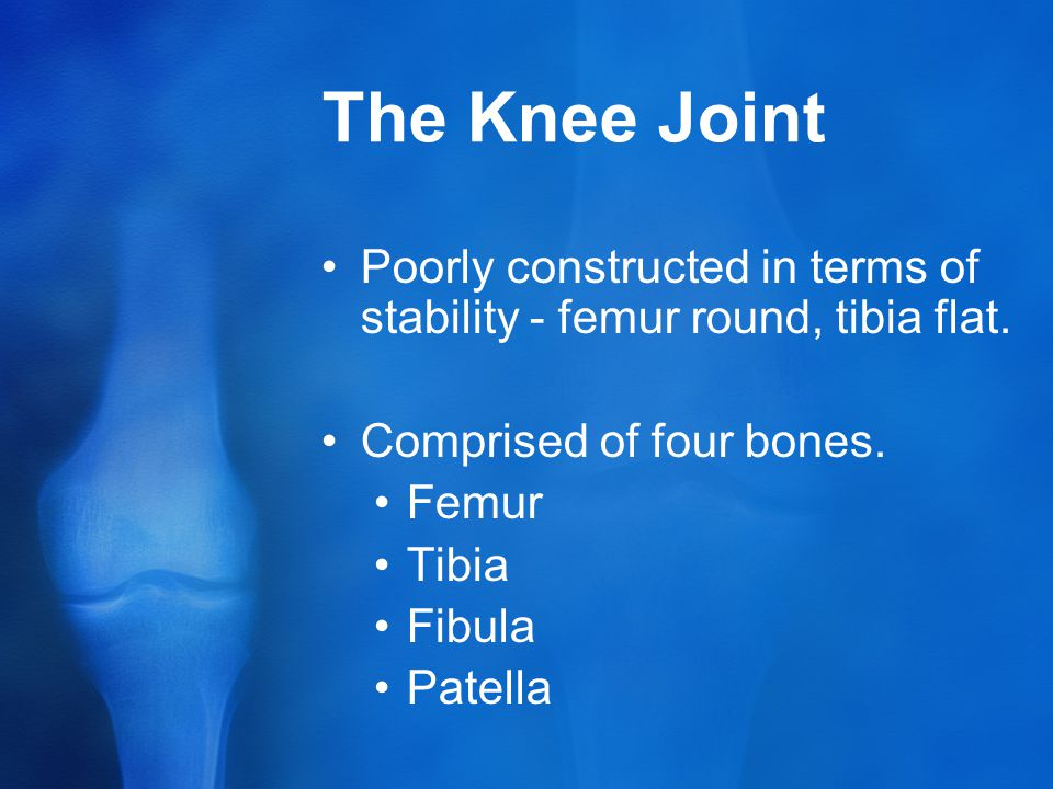 The Knee Joint Poorly constructed in terms of stability - femur round, tibia flat. Comprised of four bones.