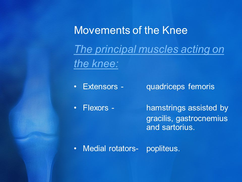 The principal muscles acting on the knee: