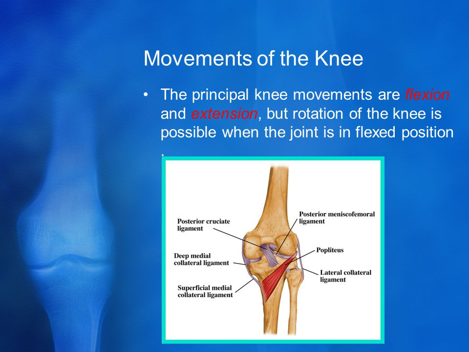 Movements of the Knee