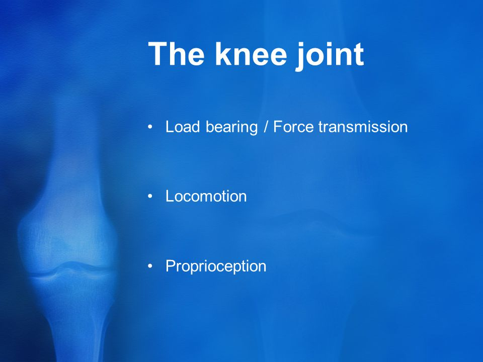Clinical anatomy of knee joint