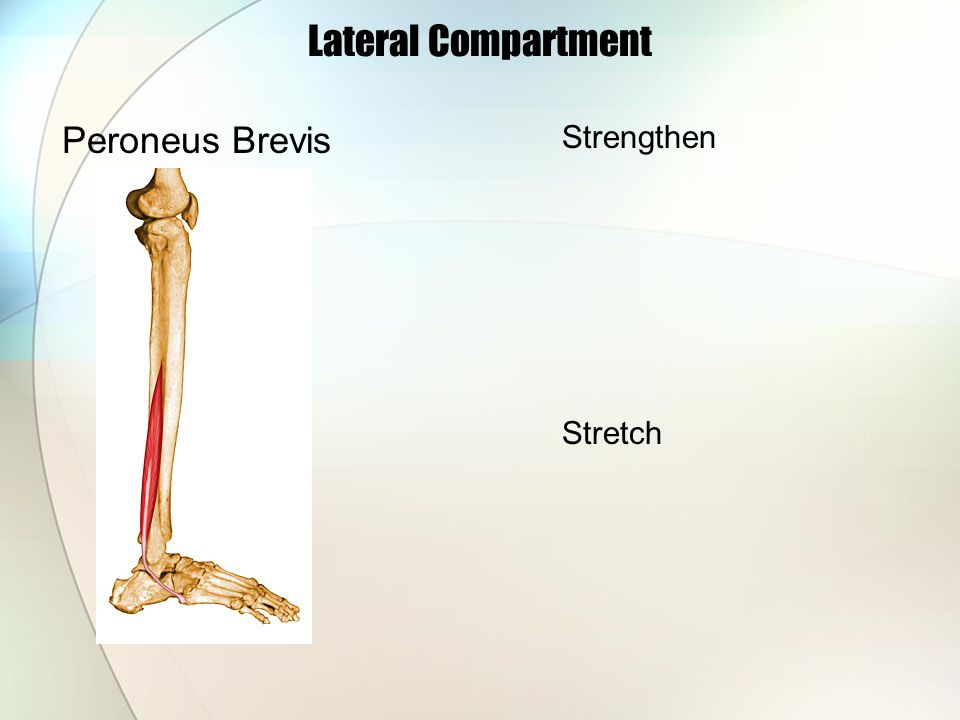 Lateral Compartment Peroneus Brevis Strengthen Stretch