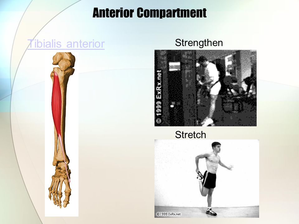 Anterior Compartment Tibialis anterior Strengthen Stretch