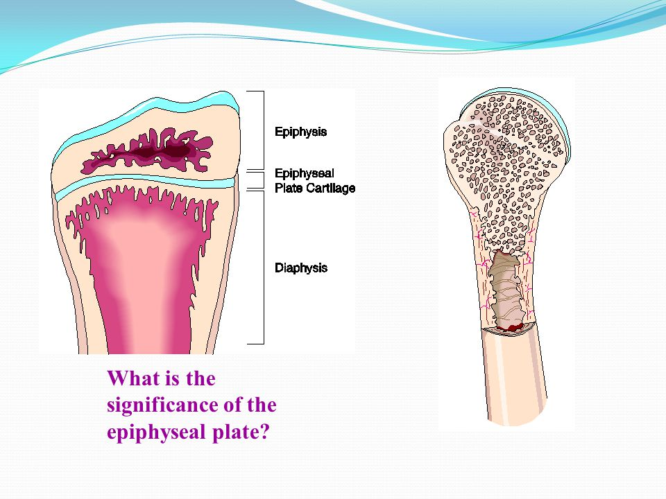 What is the significance of the epiphyseal plate