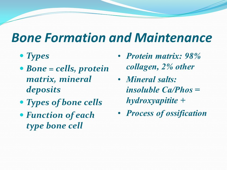 Bone Formation and Maintenance