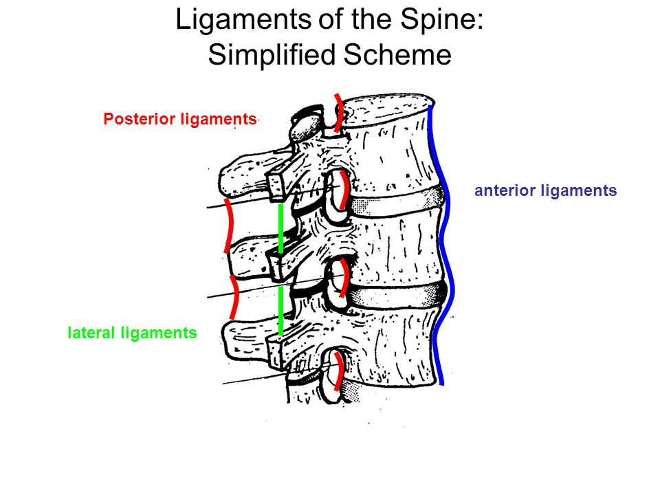 Ligaments of the Spine: Simplified Scheme
