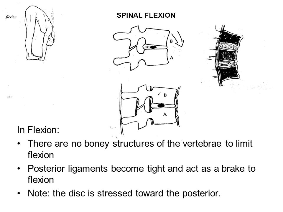 There are no boney structures of the vertebrae to limit flexion