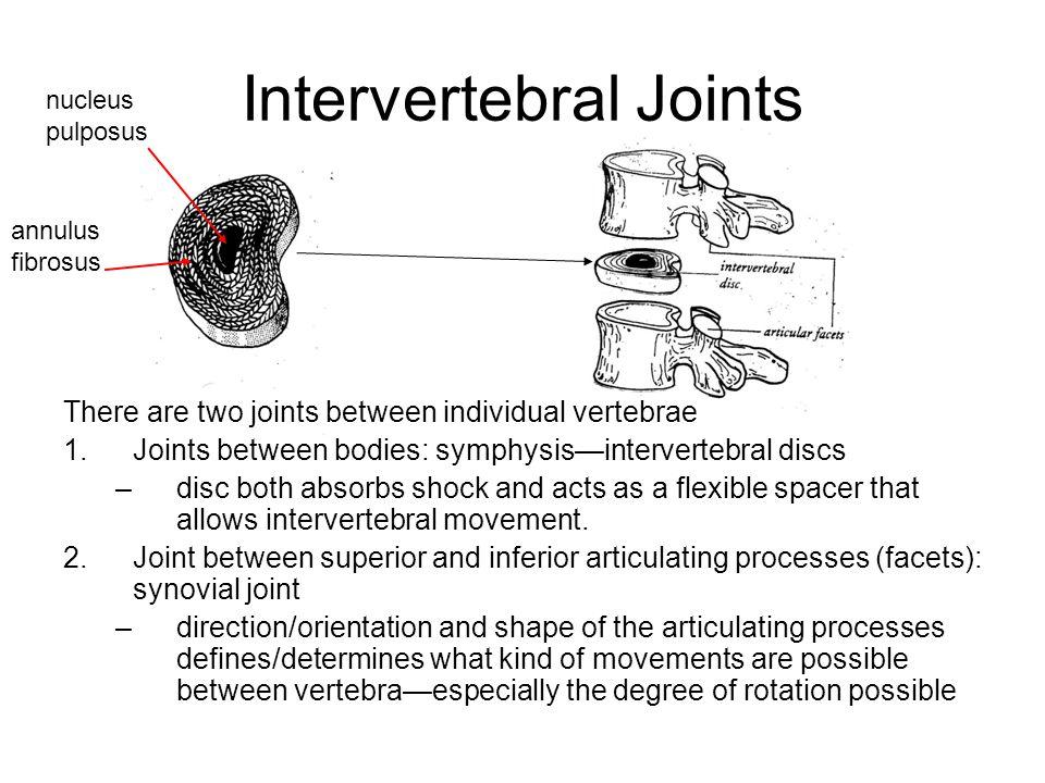 Intervertebral Joints