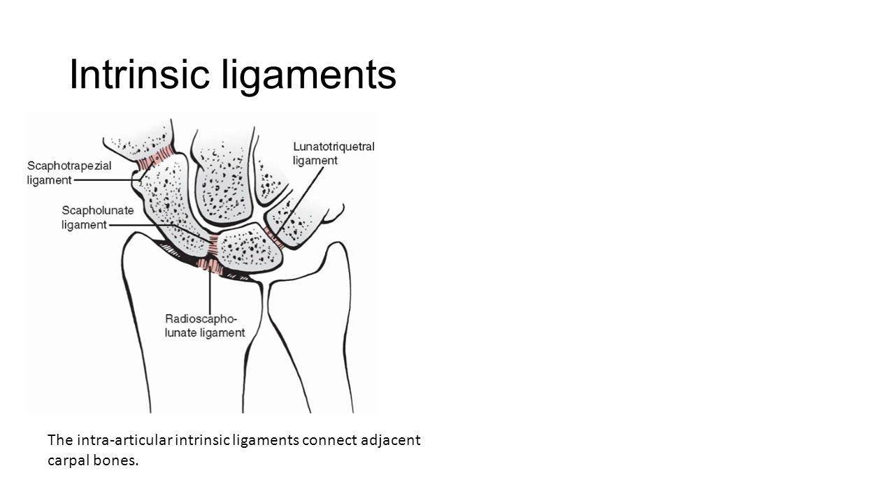 Intrinsic ligaments The intra-articular intrinsic ligaments connect adjacent carpal bones.