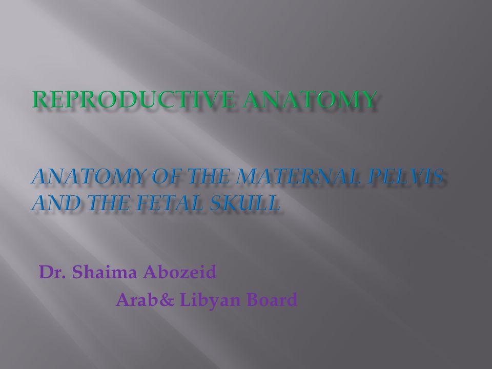 Dr. Shaima Abozeid Arab& Libyan Board