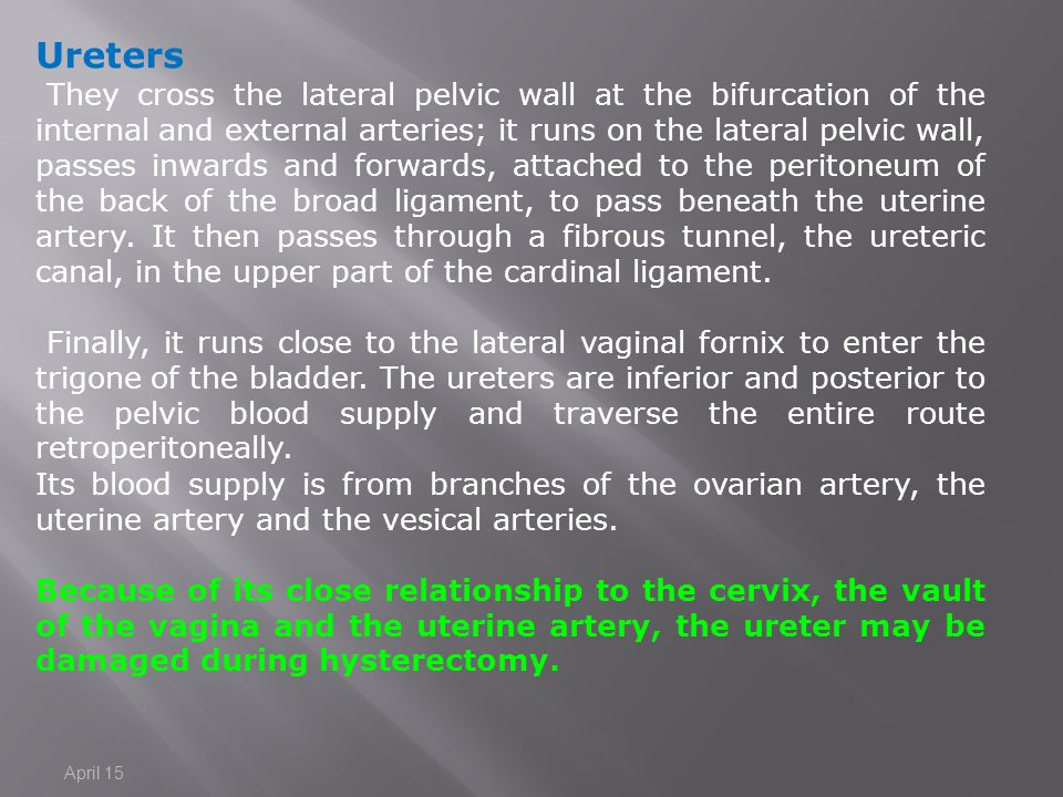 Ureters