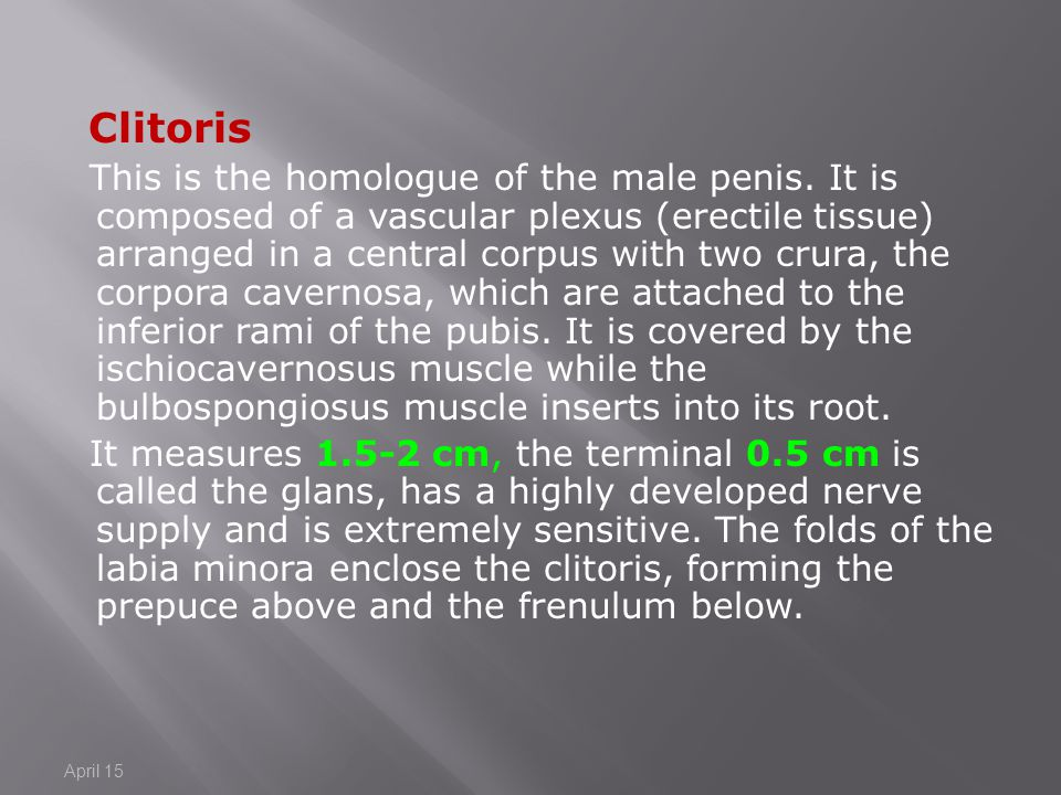 Clitoris.