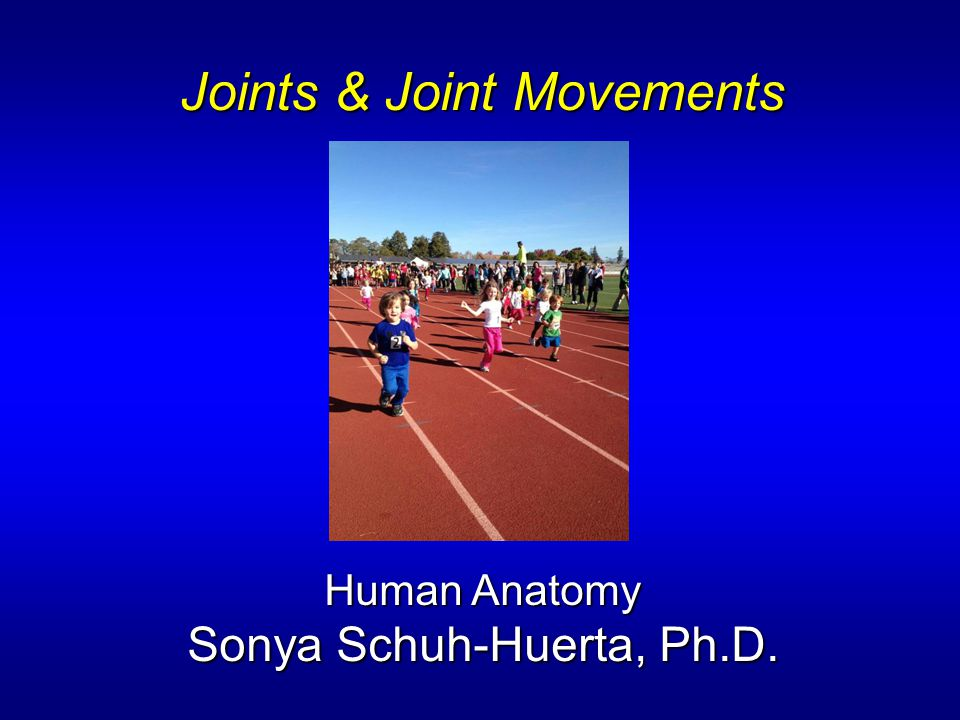 Joints & Joint Movements