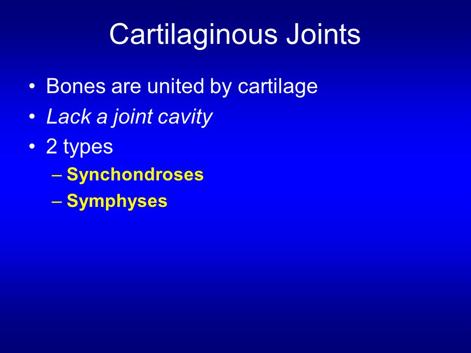 Cartilaginous Joints Bones are united by cartilage Lack a joint cavity