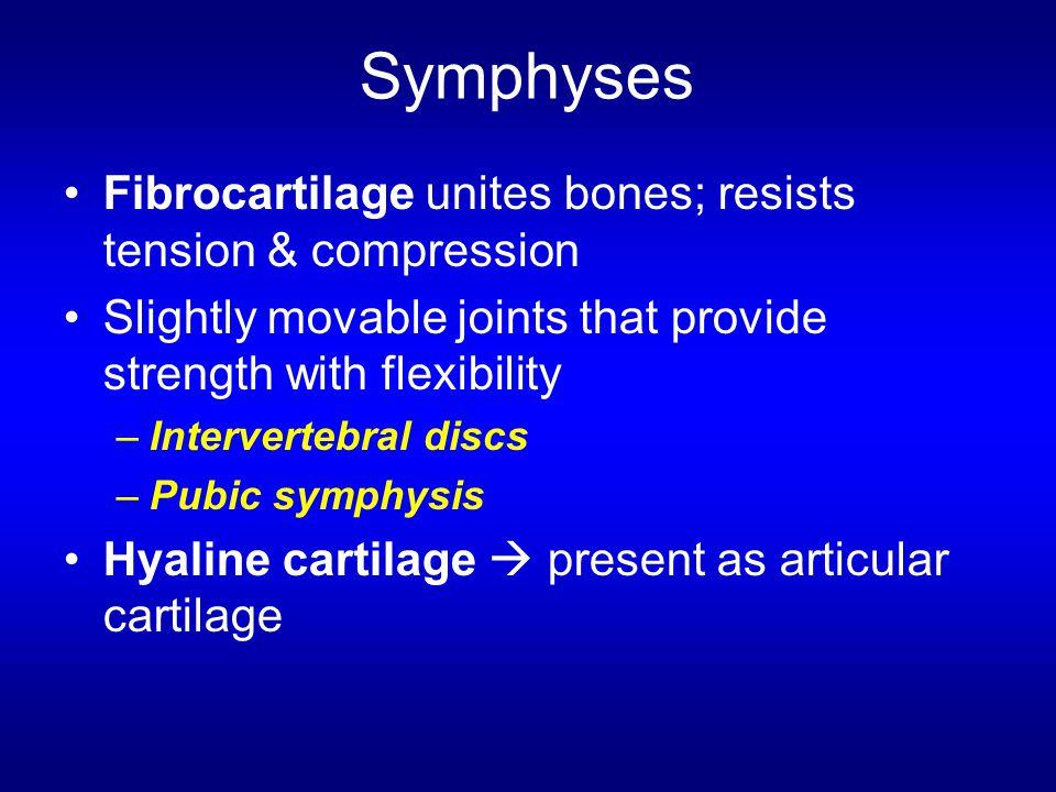 Symphyses Fibrocartilage unites bones; resists tension & compression