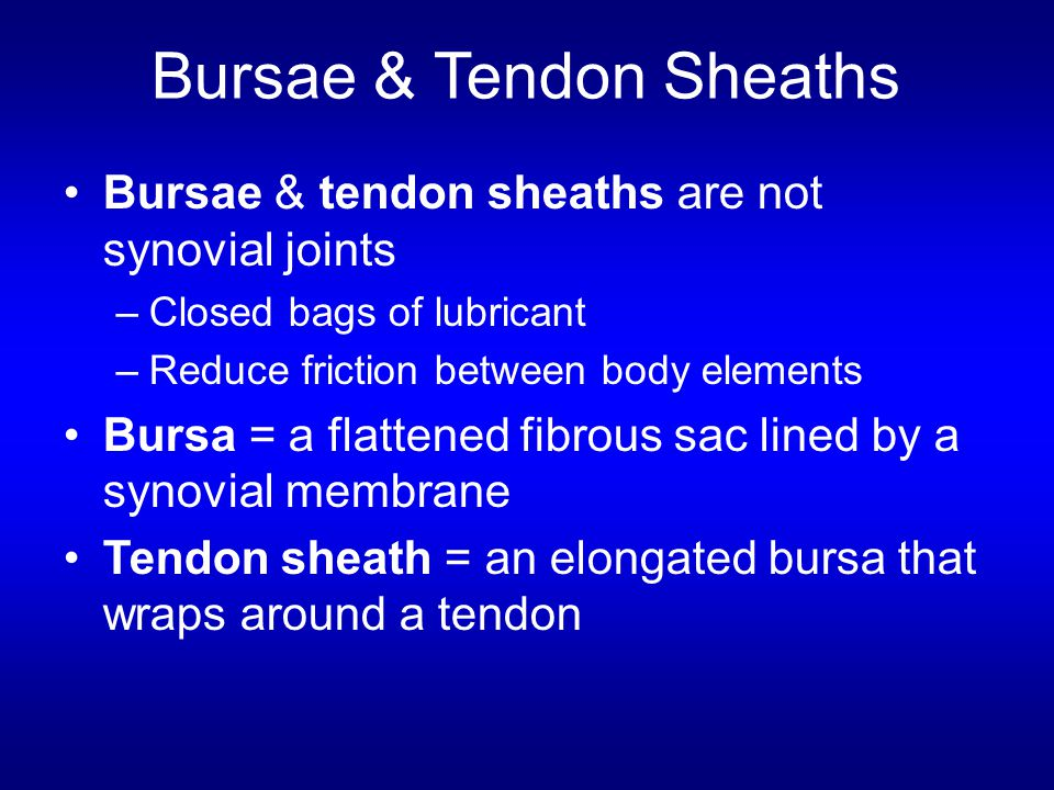 Bursae & Tendon Sheaths