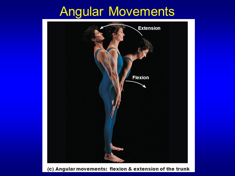 Angular Movements Extension Flexion
