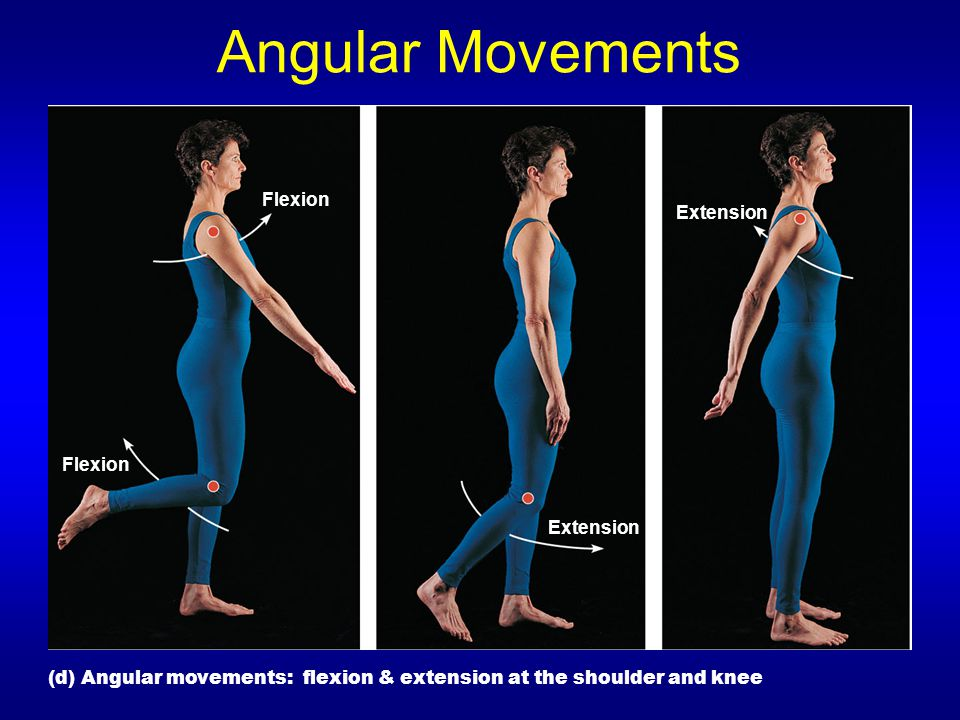 Angular Movements Flexion Extension Flexion Extension