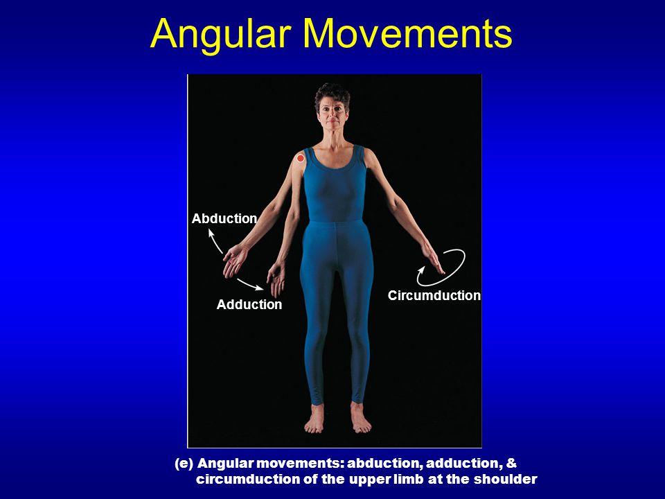 Angular Movements Abduction Circumduction Adduction