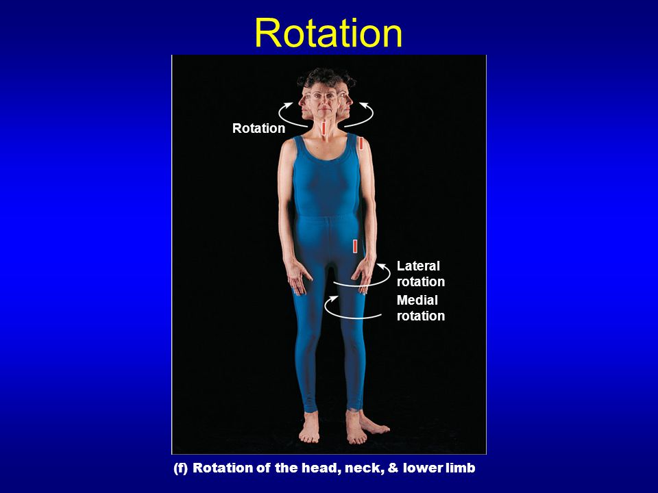 Rotation Rotation Lateral rotation Medial rotation