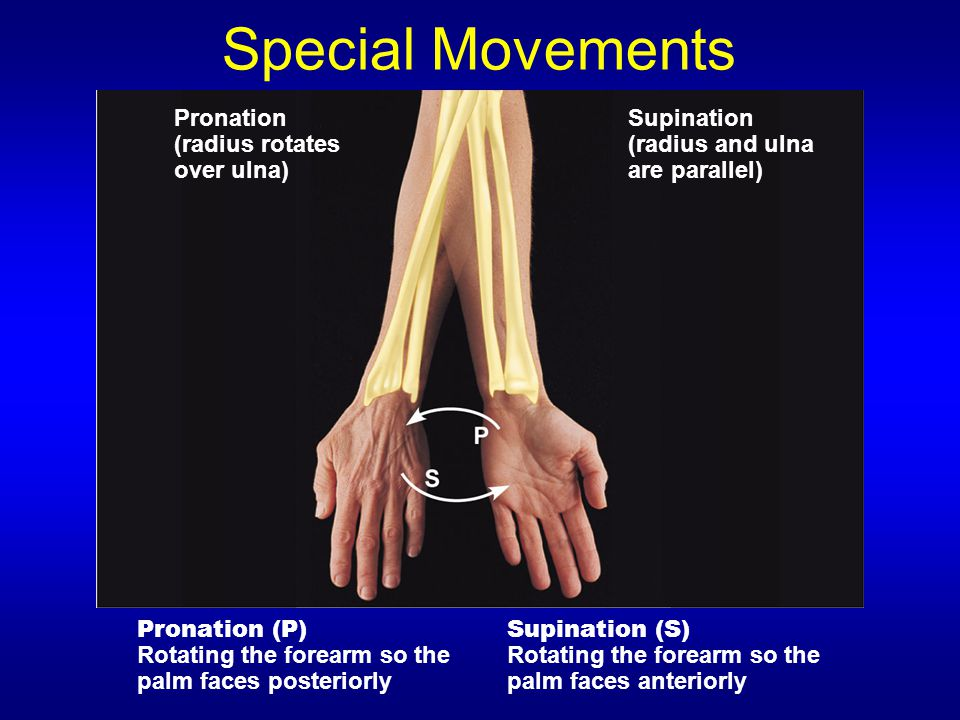 Special Movements Pronation (radius rotates over ulna) Supination