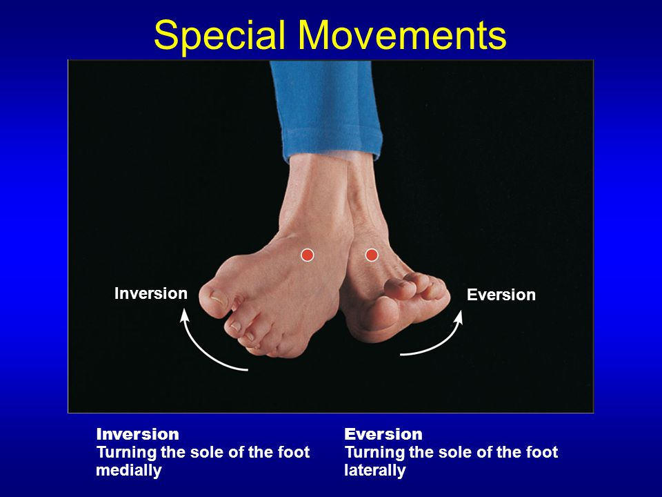 Special Movements Inversion Eversion Inversion