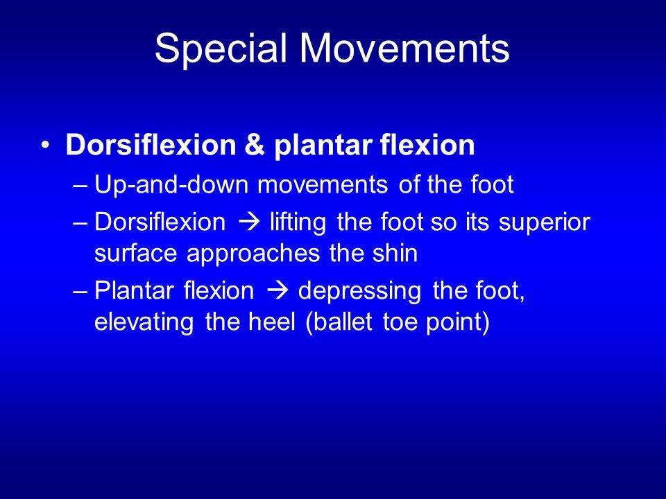 Special Movements Dorsiflexion & plantar flexion