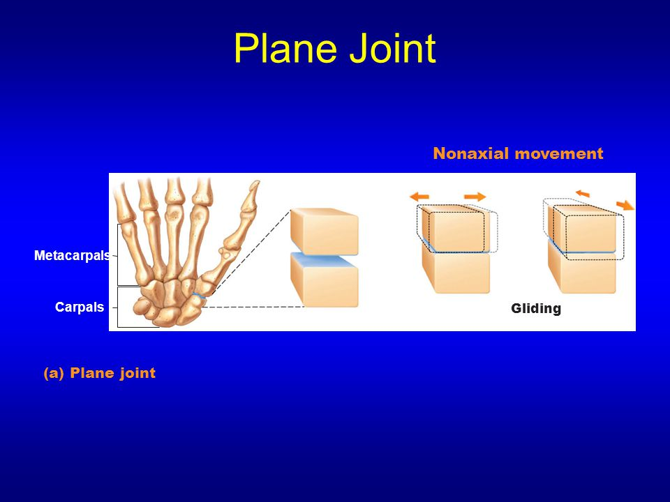 Plane Joint Nonaxial movement (a) Plane joint Metacarpals Carpals
