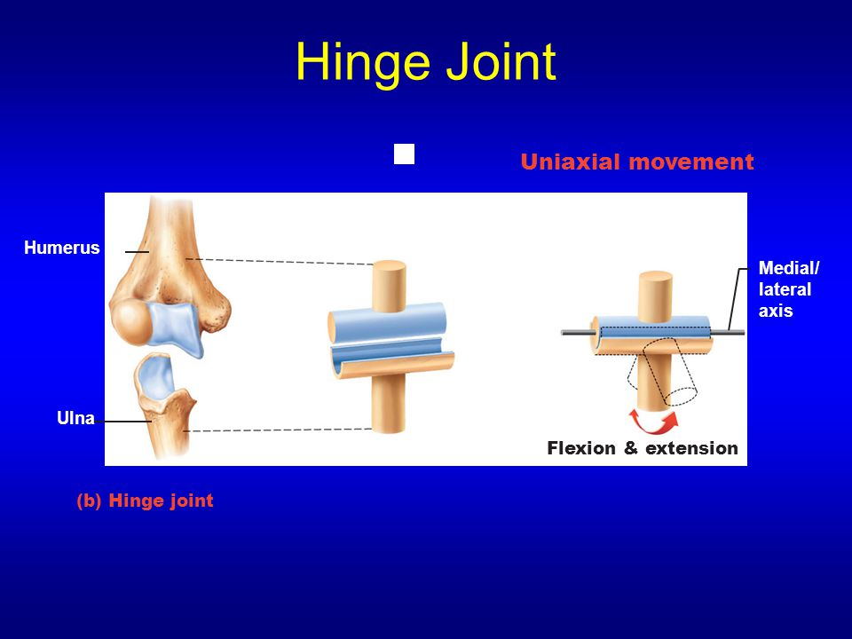 Hinge Joint Uniaxial movement Humerus Medial/ lateral axis Ulna