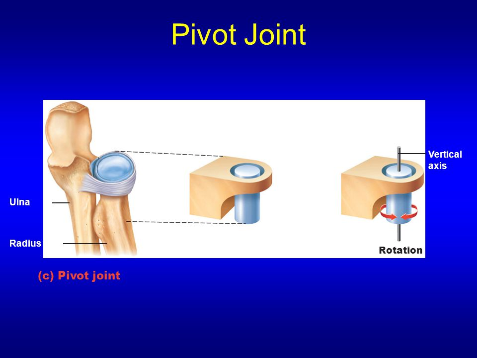 Pivot Joint Vertical axis Ulna Radius Rotation (c) Pivot joint