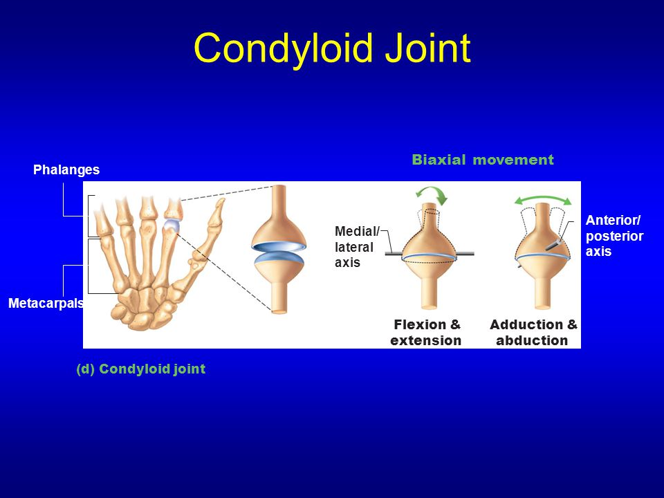 Condyloid Joint Biaxial movement Phalanges Anterior/ posterior axis