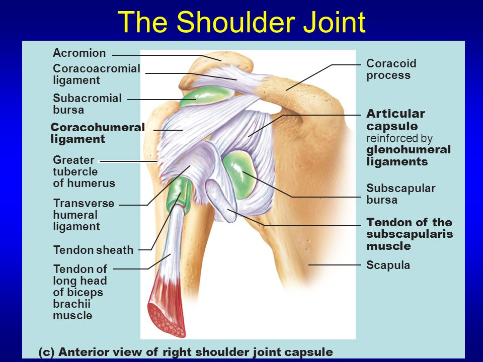 The Shoulder Joint Articular capsule Acromion Coracoid Coracoacromial